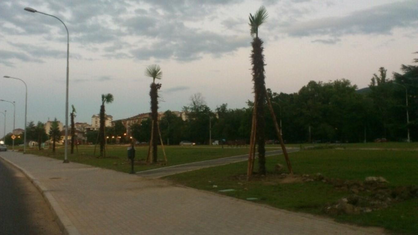 """ФОТО: Поставени палми во паркот """"Македонија"""""""