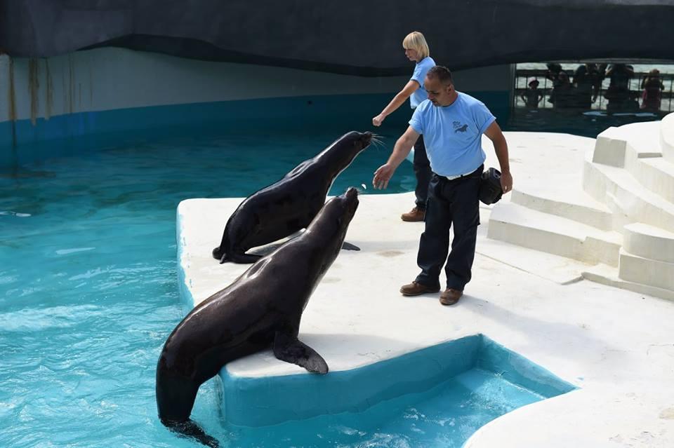 Зоолошката градина во Скопје доби нови морски лавови и мал фламинго