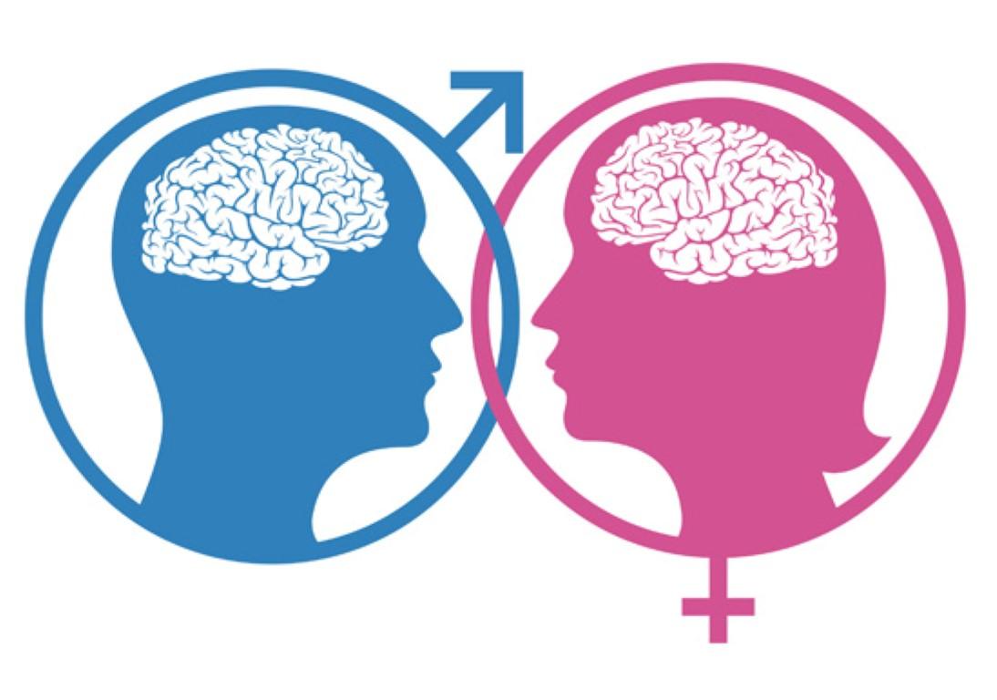 Истражување: Не постои машки и женски мозок!
