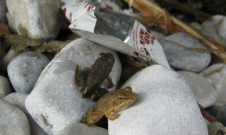ФОТО: За нас обична ќесичка - за нив планина отпад
