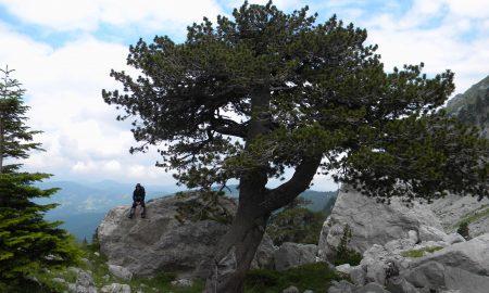 """Пронајден најстариот """"жител"""" на Европа"""