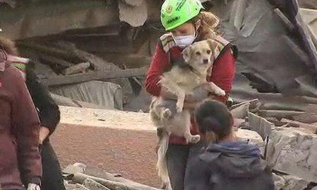 Куче преживеало девет дена под урнатини од земјотресот во Италија