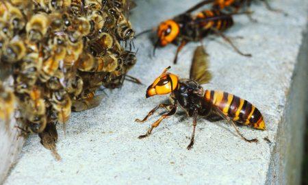 Јапoнка почина по 150 убоди од стршлени